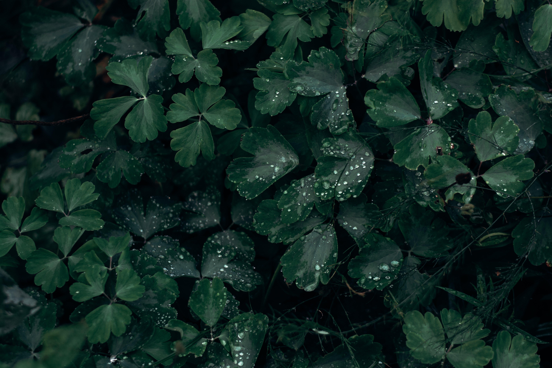 Immagine gratuita di albero, ambiente, bellissimo, buio