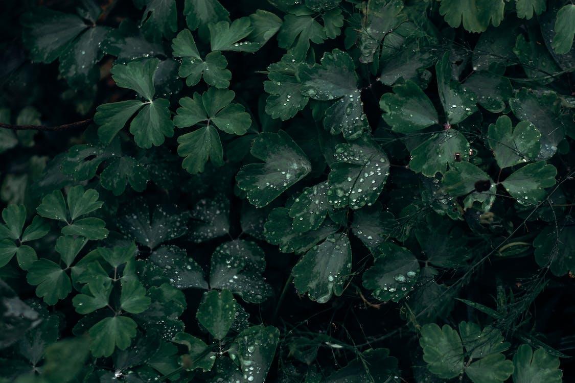 dážď, farba, HD tapeta