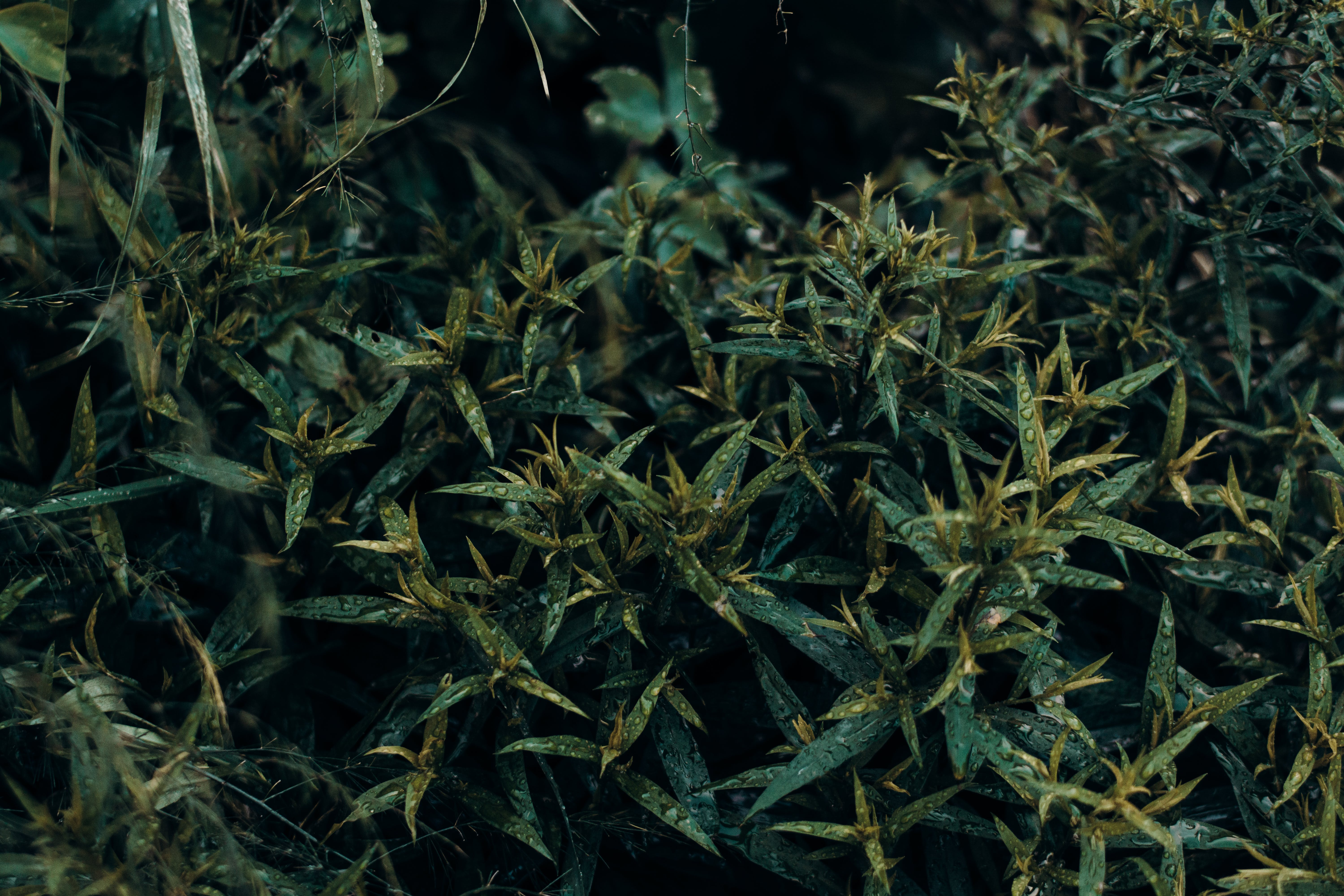 Close-up Photography Green Leafed Plants