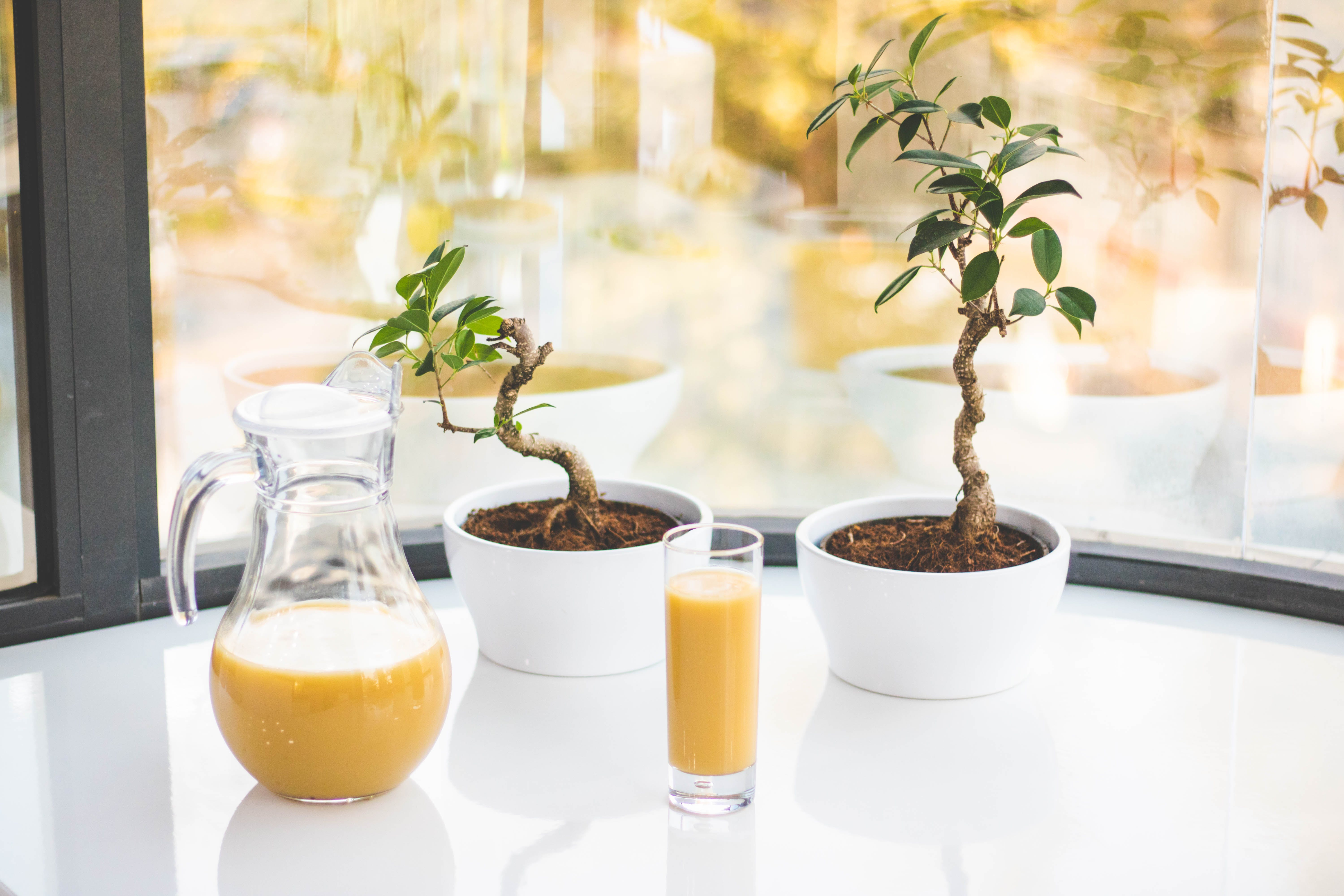 Two Green Leaf Potted Plants On White Table