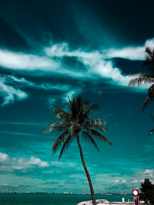 Coconut Tree Near Body Of Water