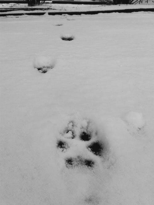 Δωρεάν στοκ φωτογραφιών με Γάτα, πατούσα