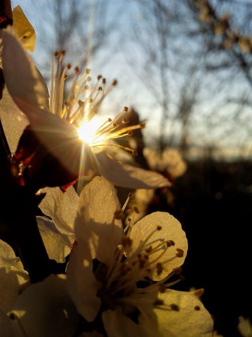 Δωρεάν στοκ φωτογραφιών με άνθος, δύση του ηλίου, ηλιακό φως, λουλούδια