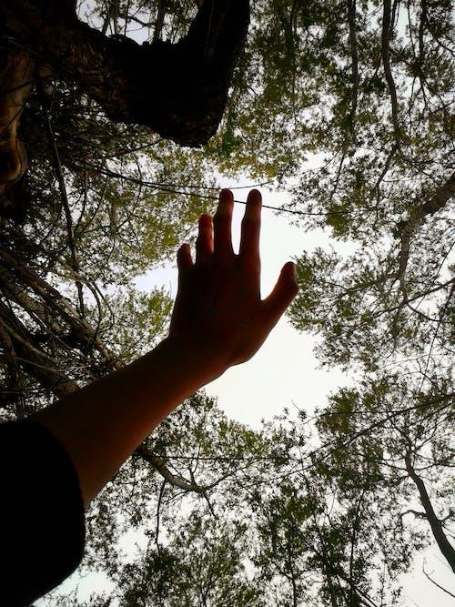 Δωρεάν στοκ φωτογραφιών με δασικός, δέντρο, ουρανός, φύση