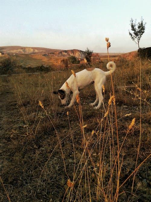 Δωρεάν στοκ φωτογραφιών με βουνό, κουτάβι, σκάψιμο, σκύλος