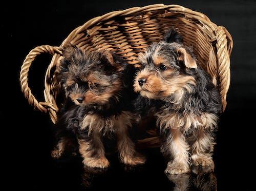 Free stock photo of baby dog, cute animals, dog