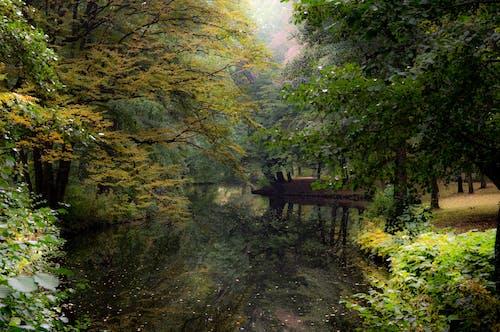 Free stock photo of mirror lake, reflection, wood