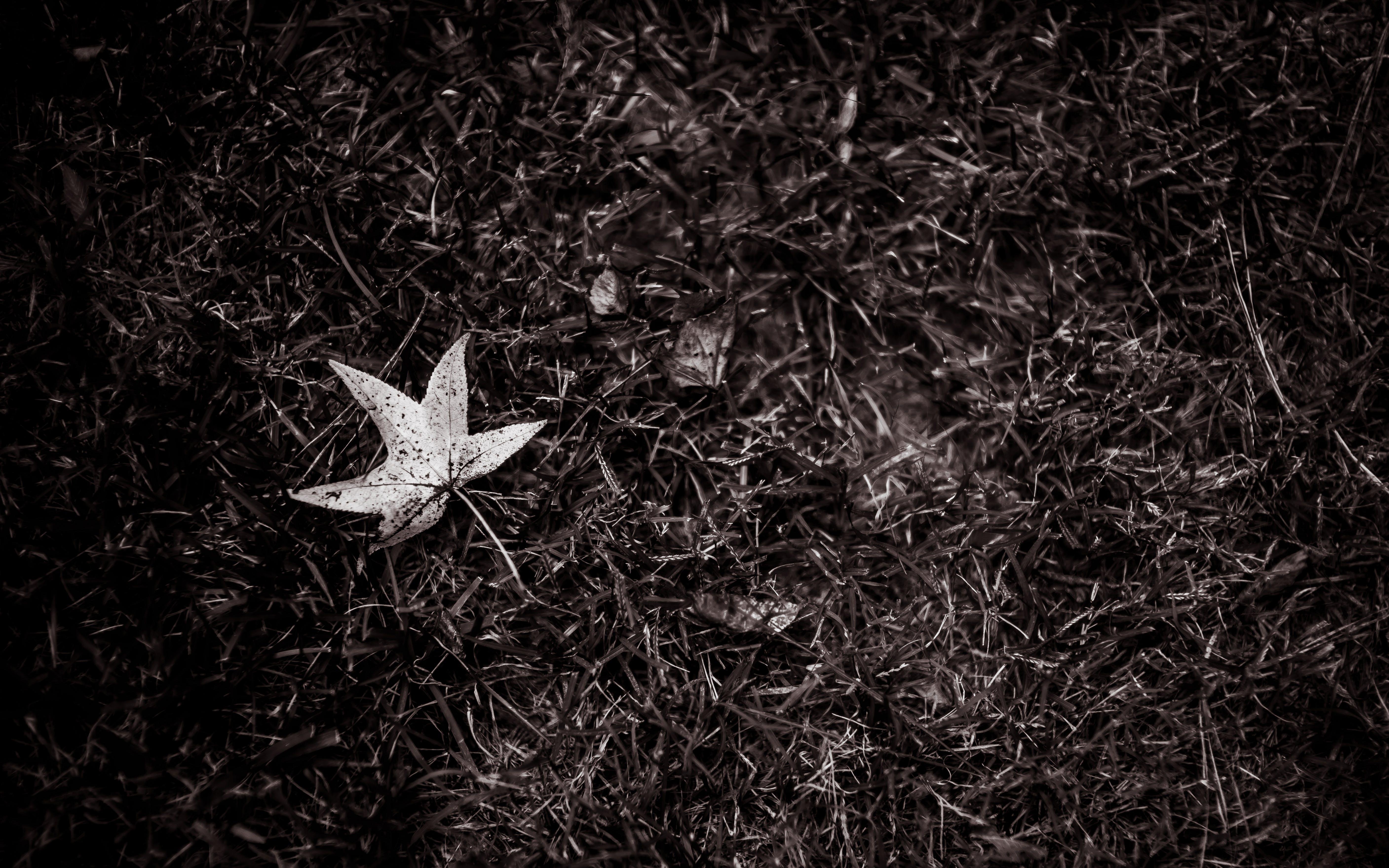 Kostnadsfri bild av fallna löv, gräs, lynnig, mörk