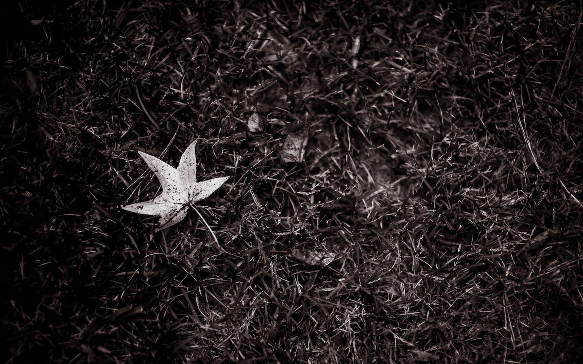 fallna löv, gräs, lynnig