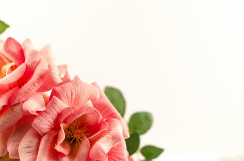 Free stock photo of beauty, bloom, blossom, bouquet
