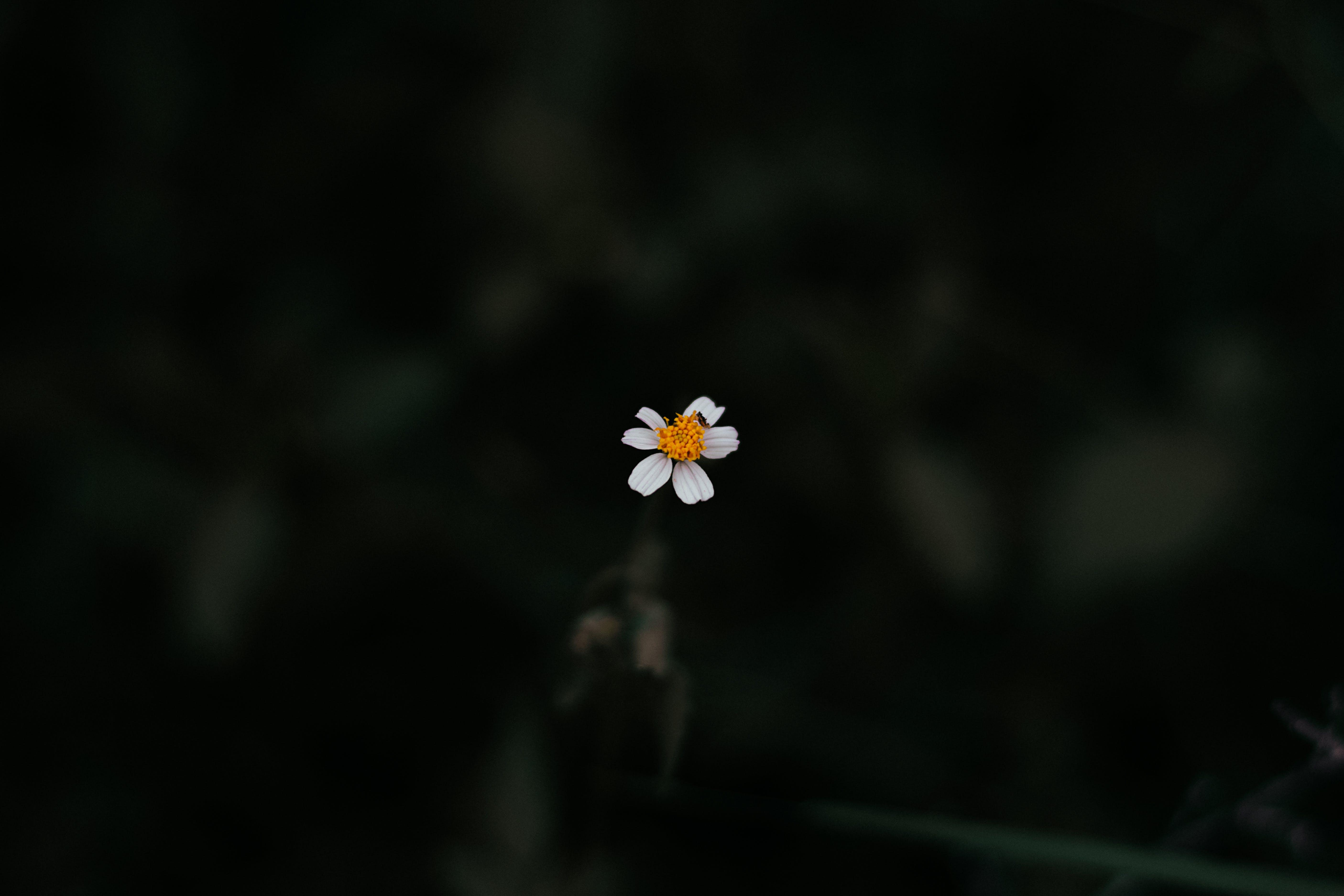 Photo of White Daisy