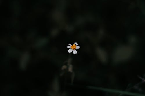 Photo of White Daisy