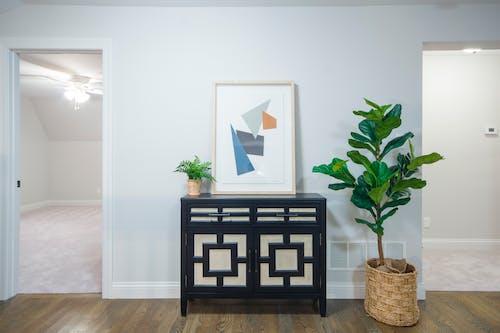 Ilmainen kuvapankkikuva tunnisteilla huonekalu, kaappi, kasvit, kattovalot