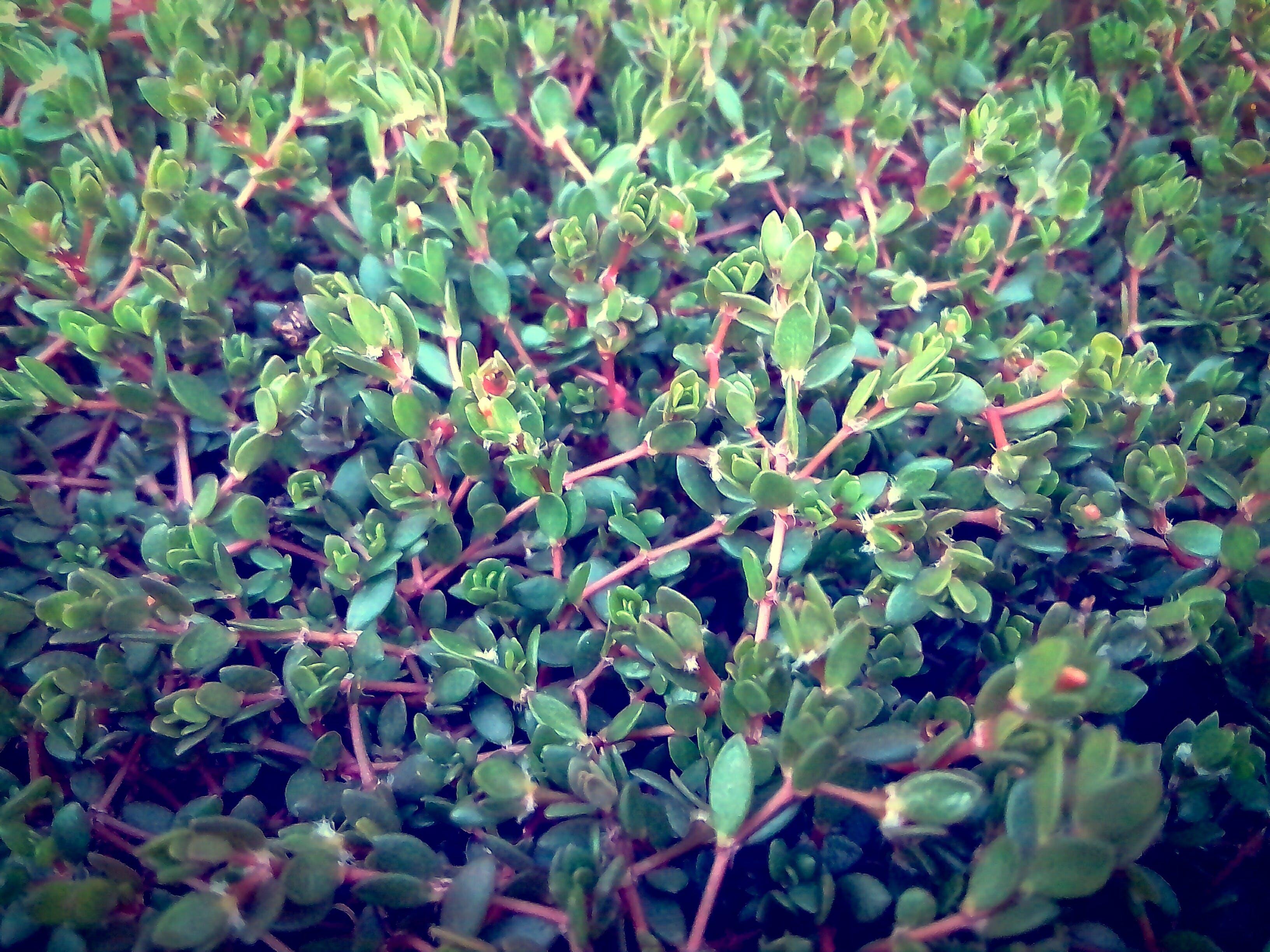 Free stock photo of 4k wallpaper, android wallpaper, dark green, dark green plants