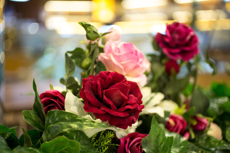 Free stock photo of Rose Bokeh
