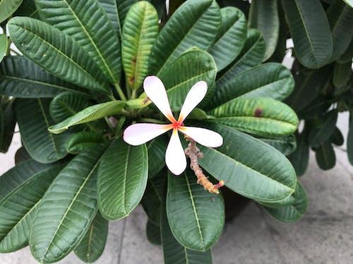 Imagine de stoc gratuită din arbore, copac, floare