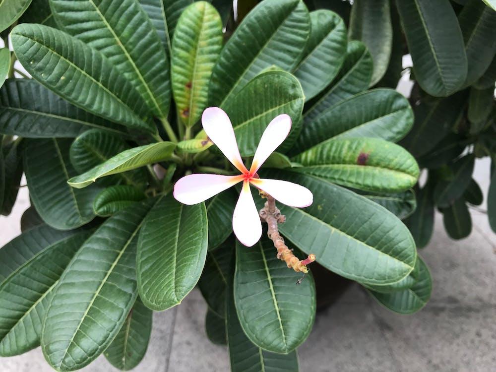 Foto profissional grátis de árvore, feriado, flor
