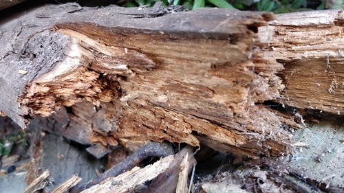 Free stock photo of Rotten Wood