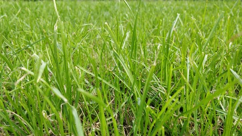 Free stock photo of Grass close up