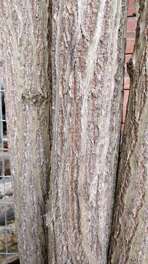 Free stock photo of bark