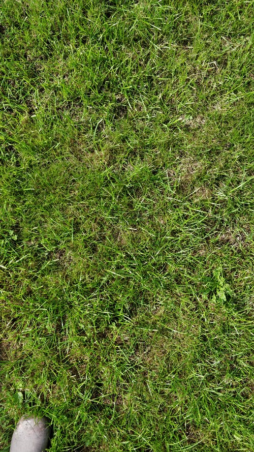 Free stock photo of Grass texture topdown