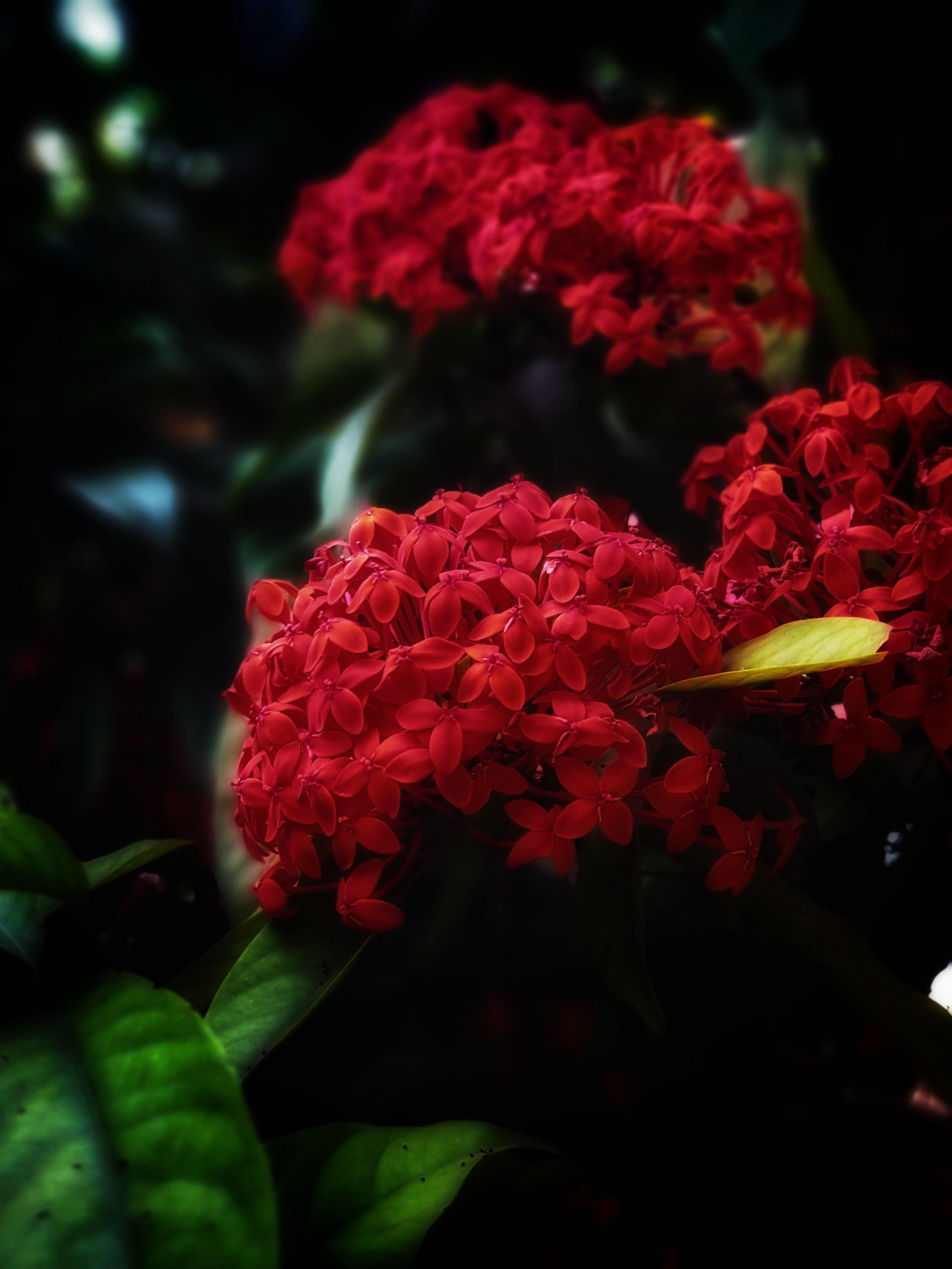 Free stock photo of #mobilechallenge, beautiful flowers, bunch of flowers, dark green