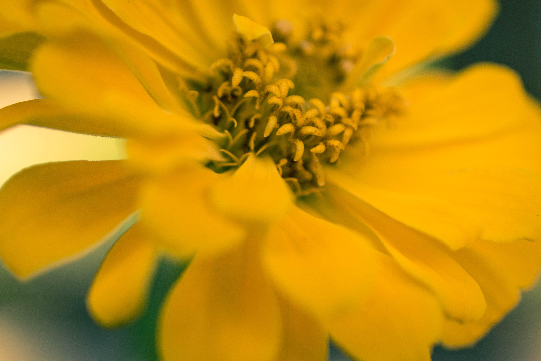 Free stock photo of flowers, garden, yellow, plants