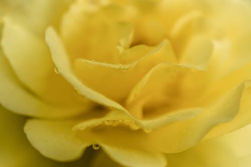 Gratis stockfoto met bloem, bloemblaadjes, geel, gele bloem