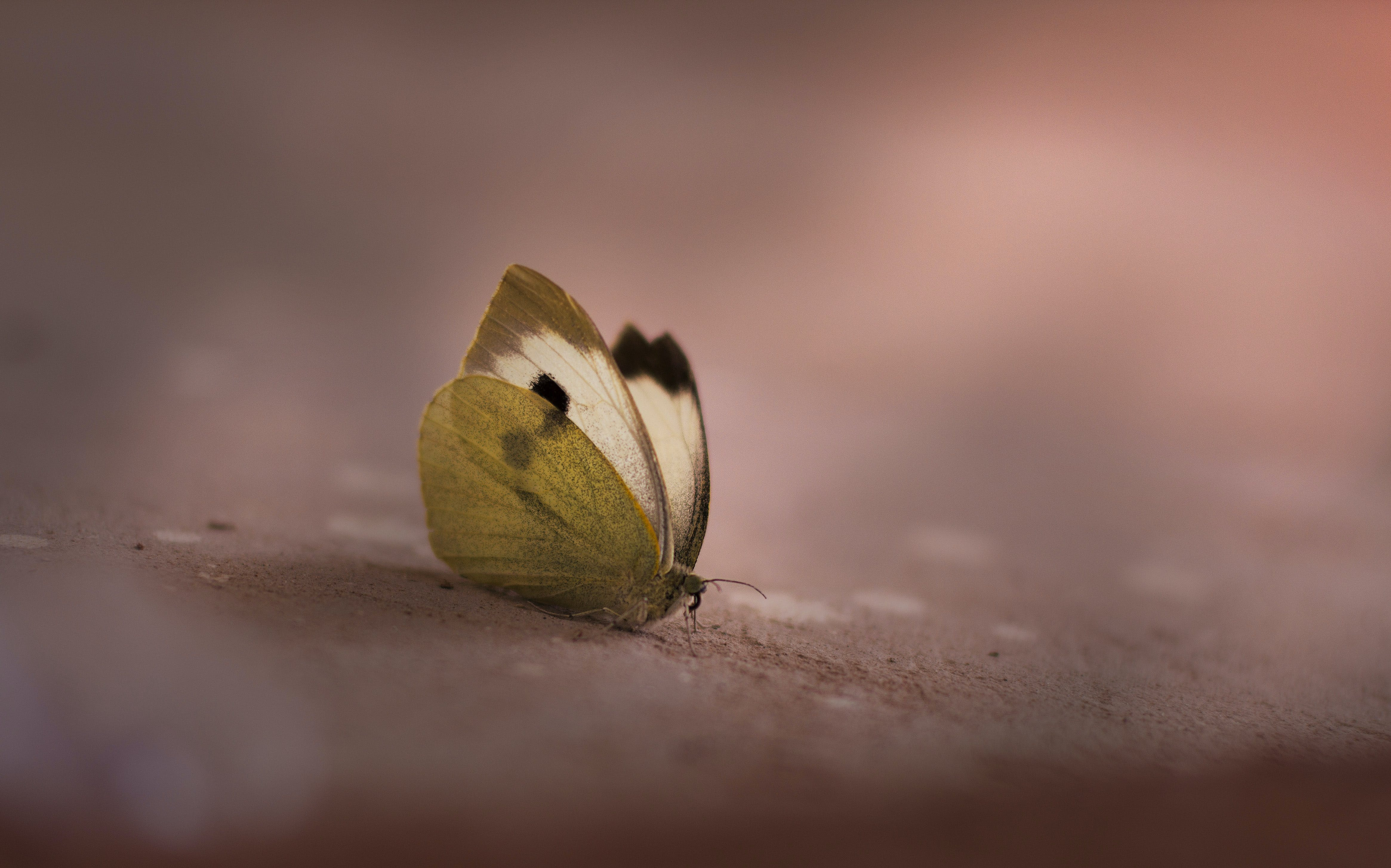 Selective Focus Photography of Butterfly on Brown Surface