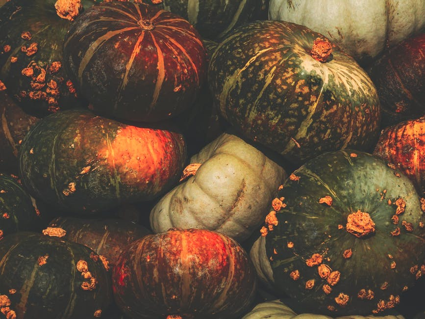 Close-up Photo of winter squash