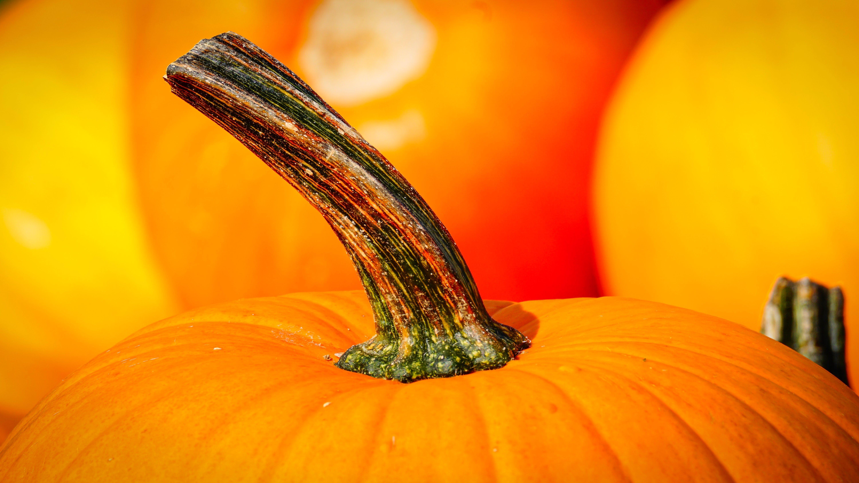 Close-up Photography of Pumpkin