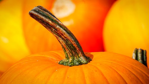 Close-up Photography of Pumpkin
