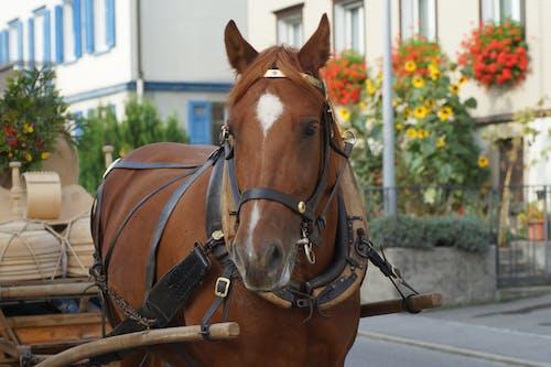 Бесплатное стоковое фото с лошадь, традиция