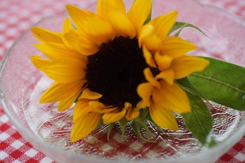 Darmowe zdjęcie z galerii z słonecznik, talerz
