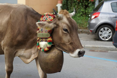 Бесплатное стоковое фото с горная вершина, корова, традиция