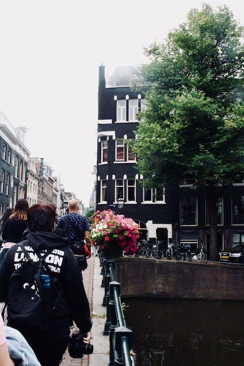 Gratis arkivbilde med amsterdam, blomst, bygning, kanal