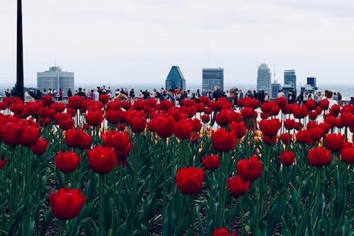 Gratis arkivbilde med blomst, blomster, by, bygning