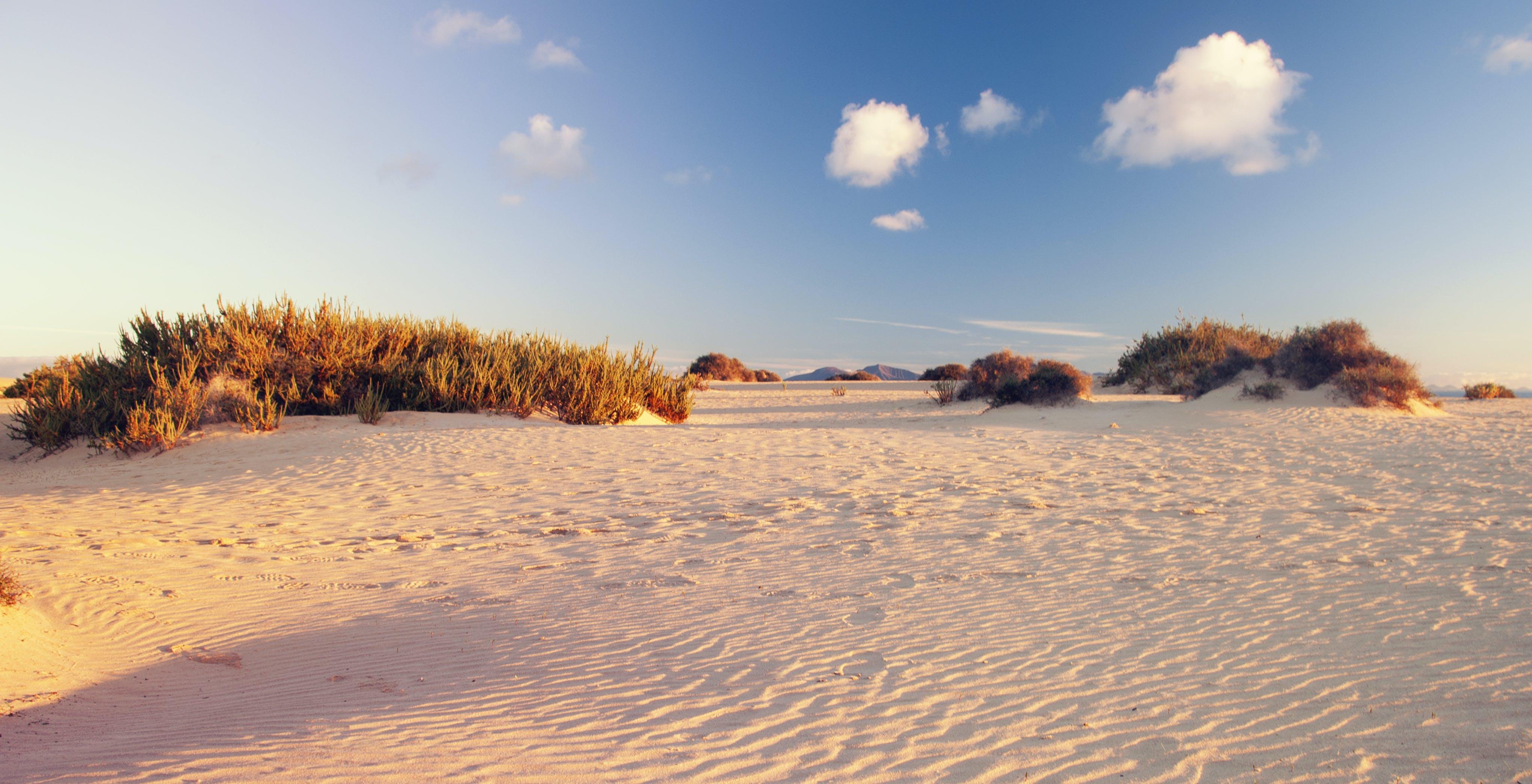Empty White Desert Near Grasses
