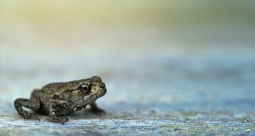 側面圖, 兩棲動物, 動物, 天性 的 免费素材照片