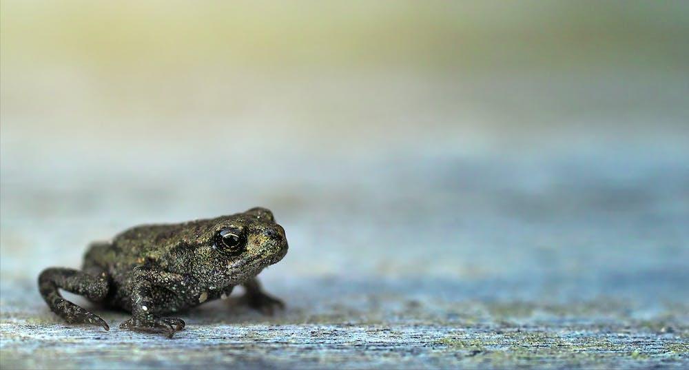Frog @pexels