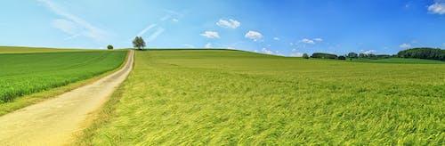 ağaçlar, alan, arazi, bitkiler içeren Ücretsiz stok fotoğraf
