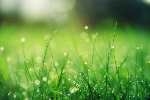 Zbliżenie Zdjęcie Zielonego Pola Trawy