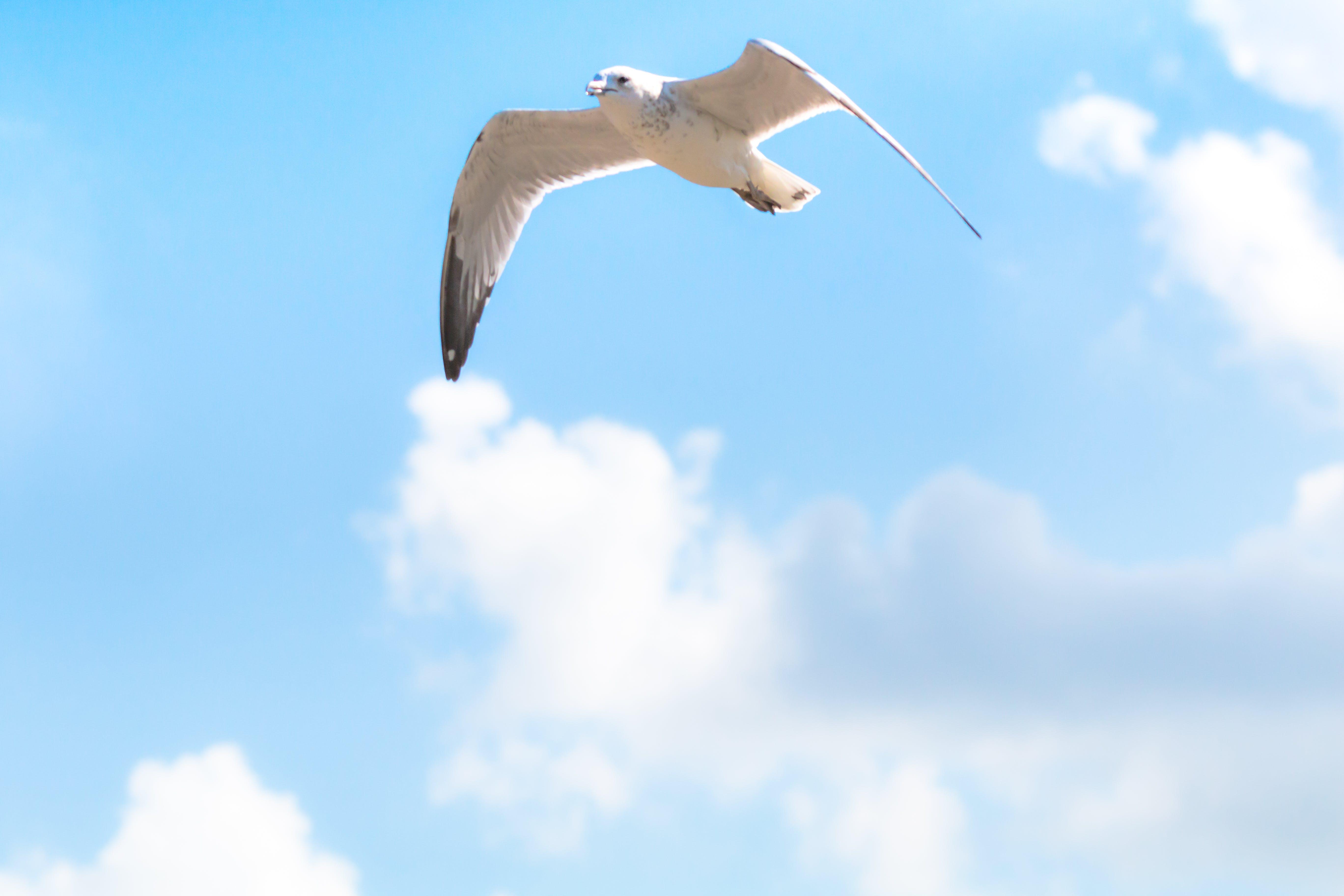 Základová fotografie zdarma na téma bezstarostný, jasná obloha, modrá obloha, obloha