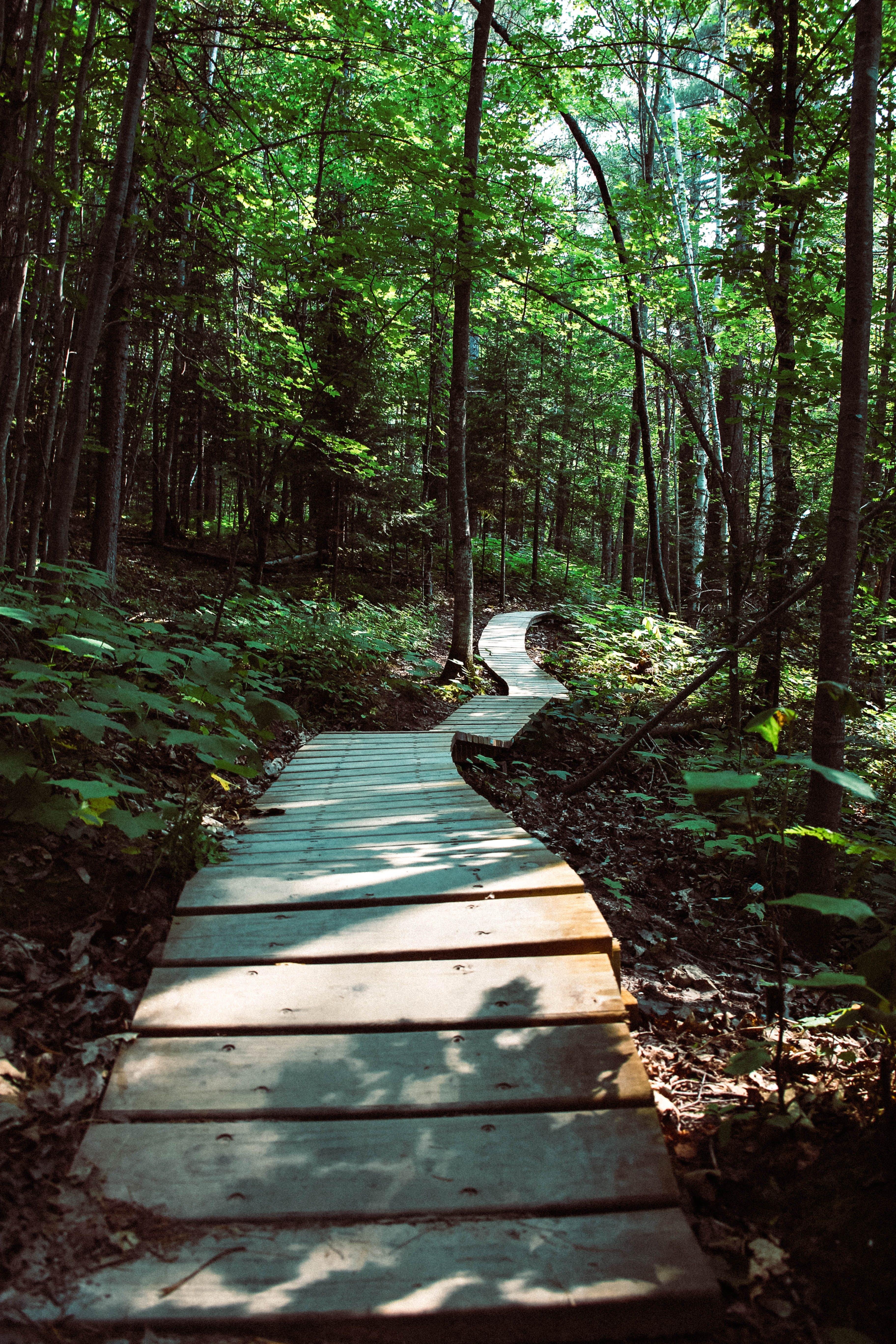 Slatted Wood Pathway Between Trees