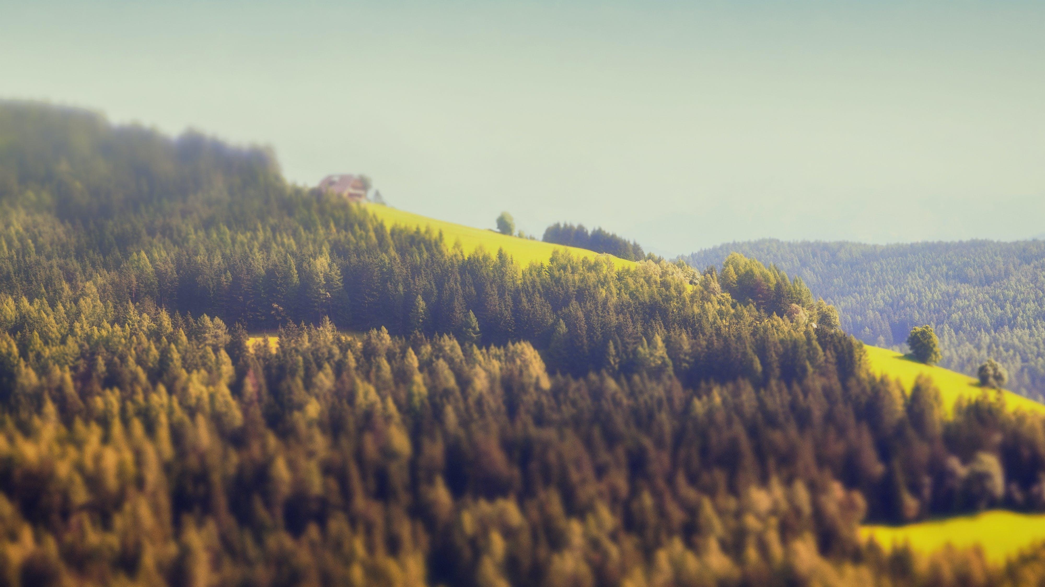 Ingyenes stockfotó alm, borongós, erdő, fa témában