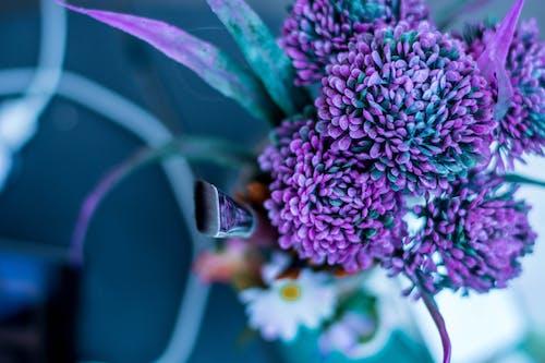 Ilmainen kuvapankkikuva tunnisteilla lila, taide, taidetarvikkeet, taiteilija