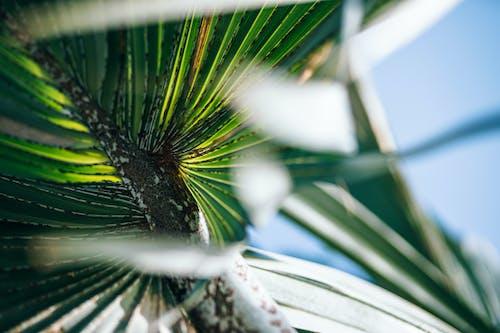 Free stock photo of artistic, background, beach, blue sky