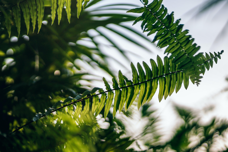 シダ, シダの葉, 成長, 日光の無料の写真素材