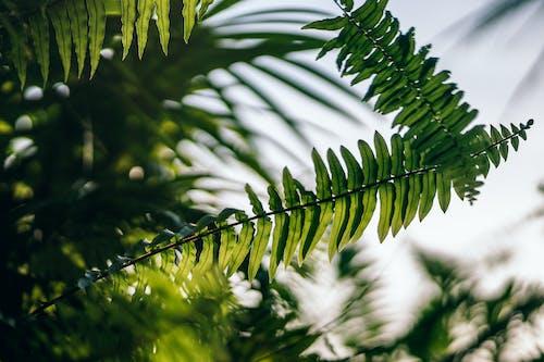 Ảnh lưu trữ miễn phí về ánh sáng ban ngày, cận cảnh, dương xỉ, lá dương xỉ