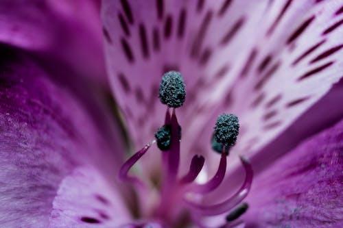 Darmowe zdjęcie z galerii z botaniczny, fioletowy, flora, jasny